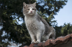 Stray cat closeup. Stray cat on old grunge house wall in sunny day stock images