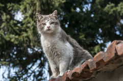 Stray cat closeup. Stray cat on old grunge house wall in sunny day Stock Photography