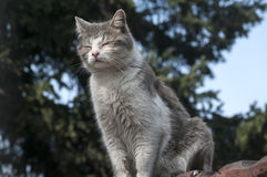 Stray cat closeup. Stray cat on old grunge house wall in sunny day stock photos