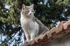Stray cat closeup. Stray cat on old grunge house wall in sunny day royalty free stock images