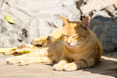 Stray cat in corner of stone way Stock Image