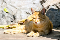 Stray cat in corner of stone way Royalty Free Stock Images