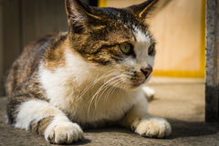 Stray cat crouch close up. In sunshine Royalty Free Stock Photography
