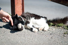 Stray cat cuddle Royalty Free Stock Photography