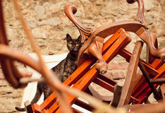 Stray cat in dump wooden chairs and vintage chairs Stock Photos