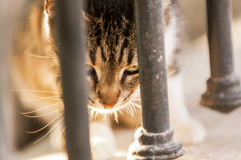 A stray cat is eating. Aside fence Royalty Free Stock Images