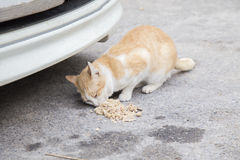 Stray cat eating food near a car on the street Stock Image