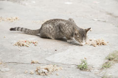 Stray cat eating food on the street Stock Photos