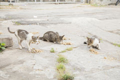 Stray cat eating food on the street with selective focus Stock Photos