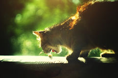Stray cat eating piece of cheese royalty free stock photos