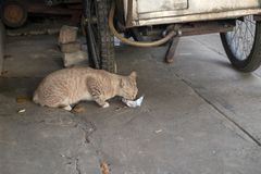 Stray cat eating food that people put on the road. Stray cat eating some food that people put on the road Stock Images