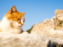Stray cat in Ephesus. Stray cat in Ephesus sleeping on top of old ruins Royalty Free Stock Photography