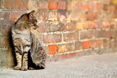 Stray cat - Felis catus. Stray cat sitting by the wall and looking somewhere stock photo