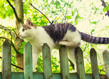 Stray cat on fence. Stray cat walk on the fence country summer photo Stock Photo
