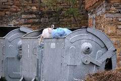 Stray Cat on the Garbage Container Royalty Free Stock Images
