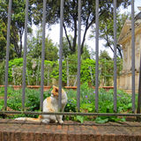 Stray Cat in a Garden with Ancient Ruins. White and orange stray cat sitting regally in a garden with ancient ruins Royalty Free Stock Images