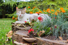 Stray cat Royalty Free Stock Photography