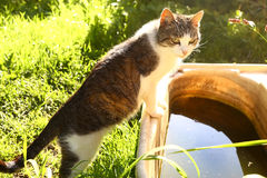 Stray cat going to drink from abandoned old bath Royalty Free Stock Photography