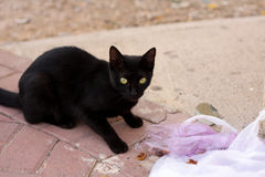 Stray Cat Going Through Trash. A stray cat caught going through upturned trash Royalty Free Stock Images