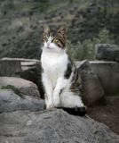 Stray cat  - Greece Royalty Free Stock Photo