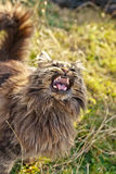 Stray cat. Growls at people Stock Photo
