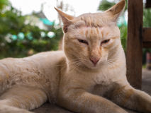 Stray Cat Head Notch Relaxing. Stray Cat Yellow White Striped Head Notch Relaxing Stock Photography