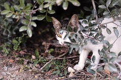 Stray cat hiding in bushes Royalty Free Stock Photography