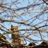 Stray cat hiding. On a roof near a tree Stock Photos
