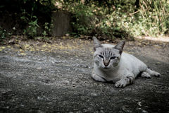 Stray cat. Homeless cat are staring suspiciously at the camera stock photos