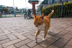 Stray Cat. On Island in Hong Kong Royalty Free Stock Images