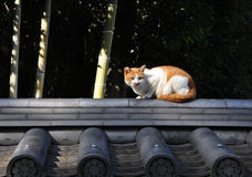 Stray cat in Kyoto Stock Images