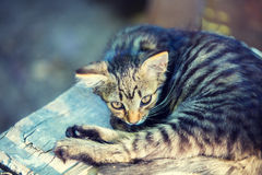 Stray cat. Cat laying on the concrete block Royalty Free Stock Images