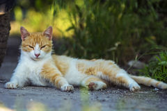 Stray cat. Stray  cat  laying on street Stock Photo