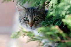 Stray cat looking at the camera stock photo