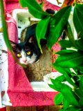 A stray cat looking for new home royalty free stock image