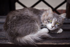 Stray cat lying on a bench close-up. Frozen stray cat lying on a bench close-up Stock Photos