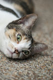 Stray cat. Is lying on the floor Royalty Free Stock Images