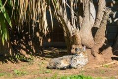 Stray cat lying in the park. Enjoing sunlight Stock Photos