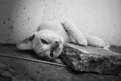 Stray cat. Stray cat lying on a pedestrian street Stock Images