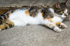 Stray cat lying in the cement floor. Stray cat lying in the shade Royalty Free Stock Photo