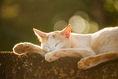 Stray cat lying sleeping outside. Stock Image