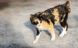 Stray cat in morning light Stock Photos