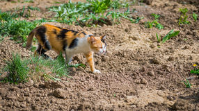 Stray cat. Outdoor. Stock Images
