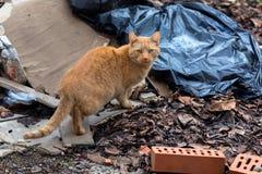 Stray cat outdoors between junk. Closeup photo Stock Images
