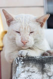 A stray cat outdoors, Sleeping on the pillar. Selective focus Stock Image