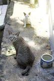 A stray cat Stock Photo
