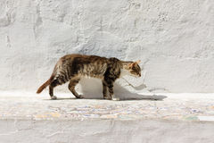 Stray cat outside. In the yard in front of a white wall out of clay or cement Stock Images