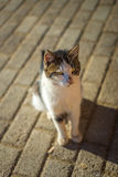 Stray cat on a pavement Stock Photo