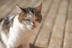 Stray cat on a pavement Royalty Free Stock Images