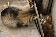 2019 Stray Cat Photographer new photo, cute brown cats. Stray Cat Photographer new photo, cute brown cats. All of my cats photos are from street cats, they are stock photos